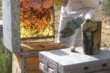 Codevasf incentiva produção apícola em Uauá