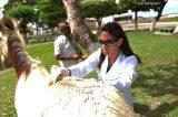 Prefeitura de Casa Nova e Univasf promovem projeto 'Os Carroceiros'
