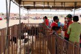 Riacho Seco comemora 17ª Festa da Agricultura