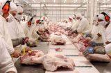 Rússia proíbe importação de carne suína de 10 empresas do Brasil