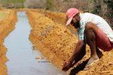 Tecnologia usada na irrigação reduz consumo de água em Juazeiro