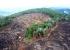 MPs estaduais deflagram operação em 17 estados para coibir desmatamento da Mata Atlântica