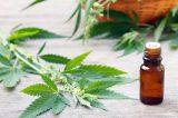 Farmácias estão sem previsão para início das vendas dos remédios a base da maconha