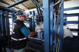 Febre aftosa: Aumenta percentual de animais vacinados na Bahia