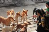 Melhor amigo? Estudo com cães de rua revela que eles nascem prontos para nos entender
