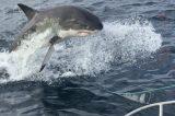 Veja o vídeo: tubarão mata adolescente de 15 anos na frente de pais e amigos