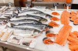 Pessoas são internadas por comer peixe no Recife